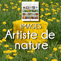 CARRE ARTISTE DE NATURE