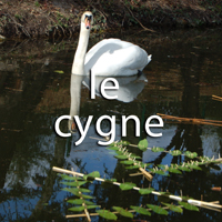 VIDEO LE CYGNE